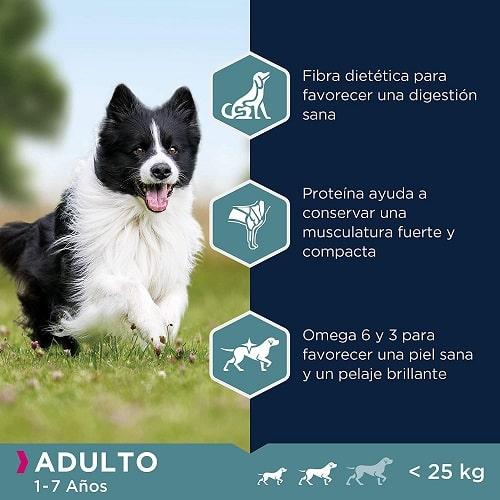 Ventajas de utilizar pienso Eukanuba para perro pequeño y mediano rico en cordero y arroz