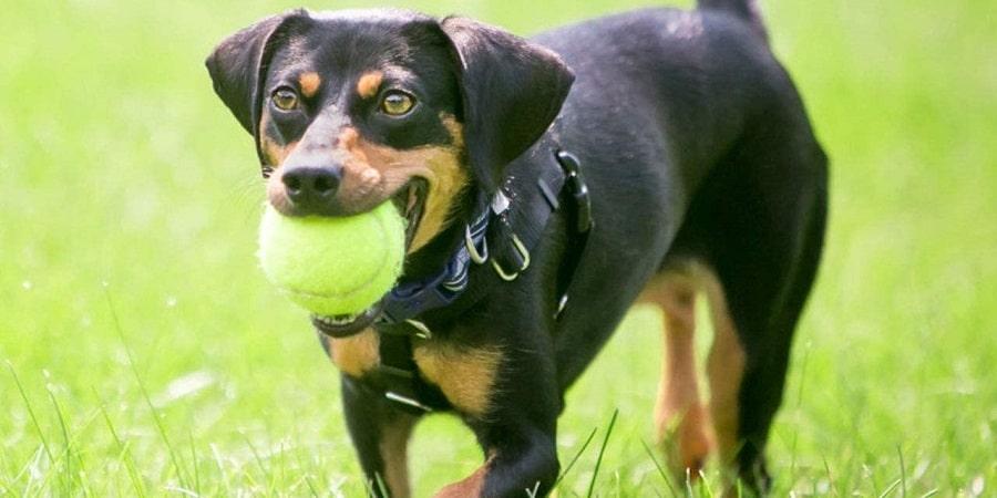 Comparativa de 4 lanzadores de pelotas para perros