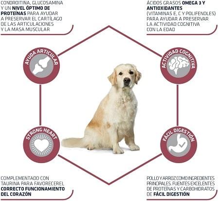 Advance Active Defense Perros Senior Maxi
