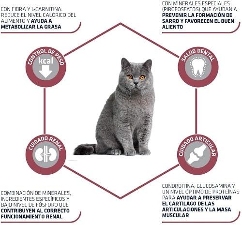 Alimento seco para gato Advance Active Defense Sterilized Senior