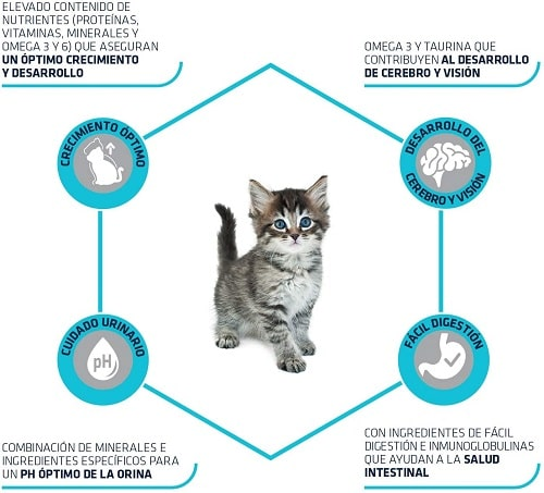 Alimento seco para gato Advance Active Defense Kitten