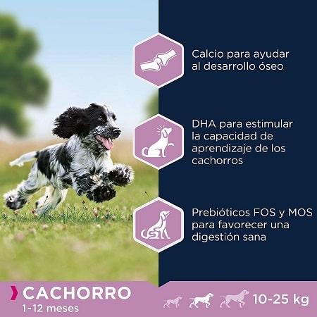 Beneficios Eukanuba para perros cachorros razas medianas