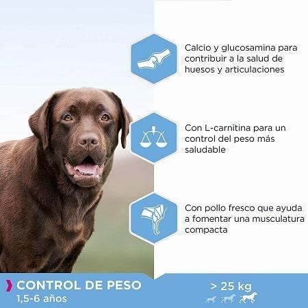 Beneficios pienso Eukanuba para perros con sobrepeso raza grande