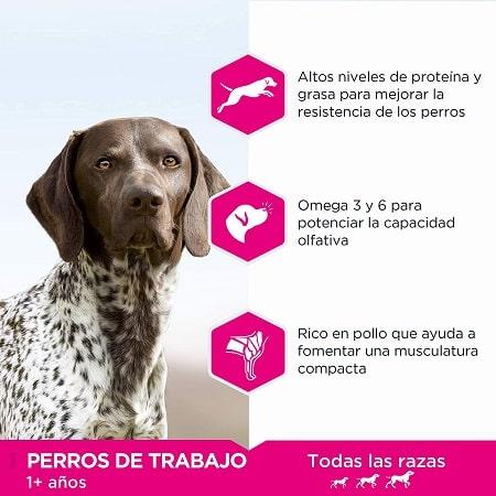 Eukanuba Daily Care Working Endurance para perros de trabajo