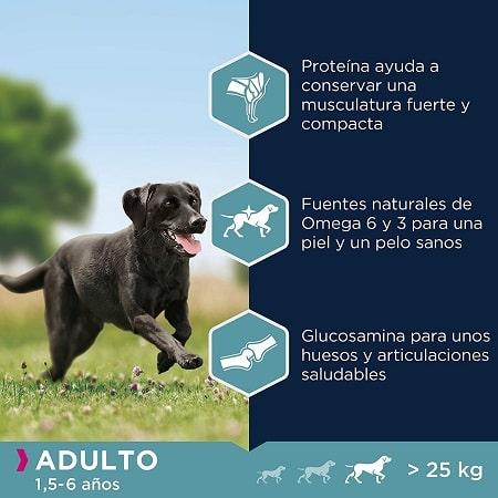 Beneficios Pienso Eukanuba para perros de raza grande