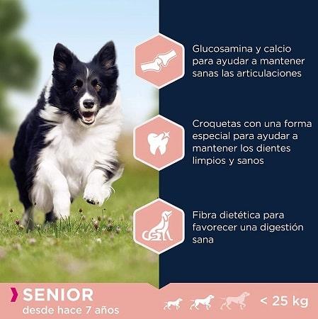 Beneficios Pienso Eukanuba para perros senior tamaño pequeño y mediano.