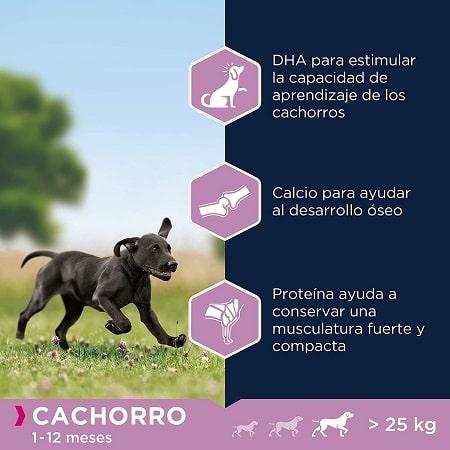Beneficios pienso Eukanuba Puppy razas grandes