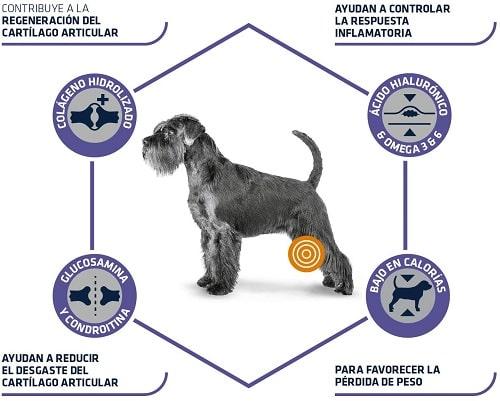Advance Veterinary Diets Articular Senior para perros