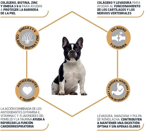 Pienso para perro Bulldog Francés Advance Active Defense