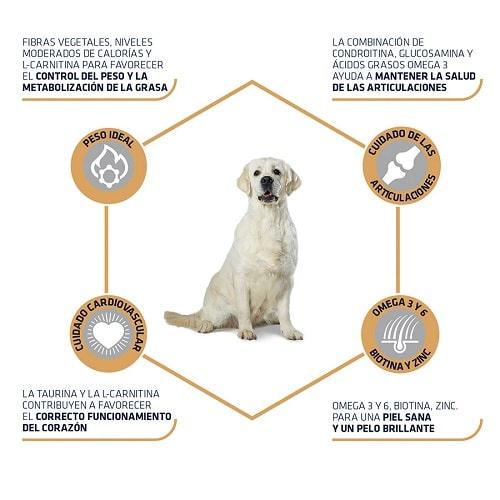 Pienso para perro Labrador Golden Retriever Advance Active Defense