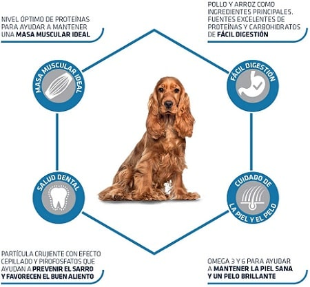 Pienso para perro Advance Active Defense para perro de raza mediana