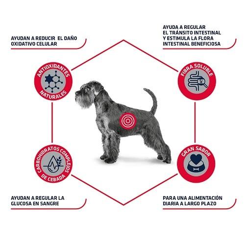 Advance Veterinary Diets Diabetes para perros
