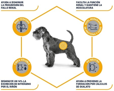 Advance Veterinary Diets Renal para perros