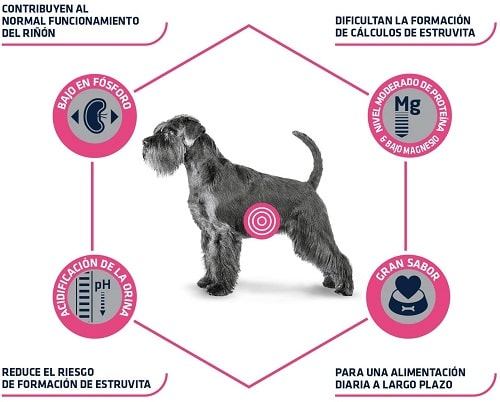 Advance Veterinary Diets Urinary para perros
