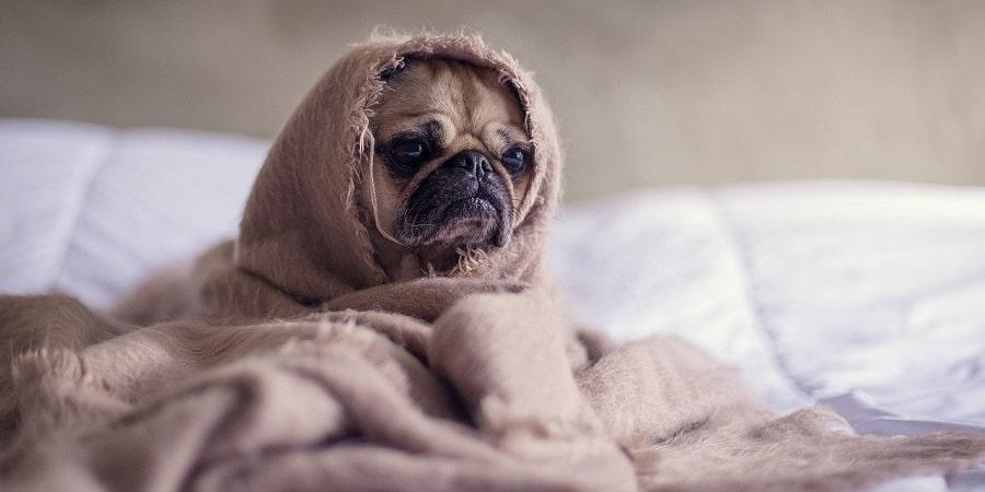 ¿Cómo prevenir y detectar la enfermedad del Parkinson en los perros?