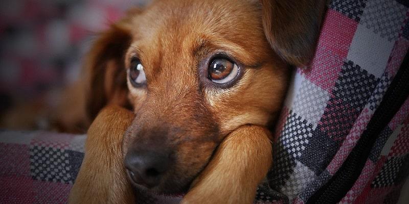 ¿Cuáles son los efectos secundarios de la anestesia en los perros?