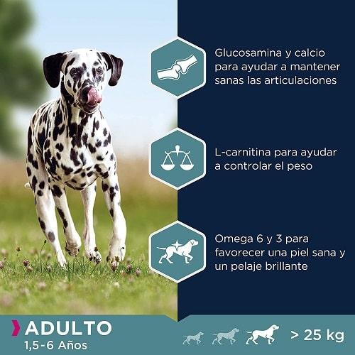 Beneficios pienso para perros Eukanuba Adulto Dálmata