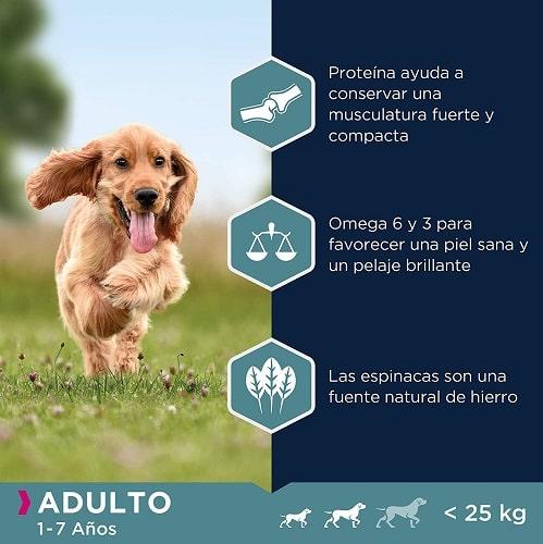 Pienso para perros Eukanuba adulto razas grandes con proteína