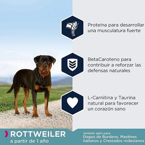 Pienso para perros Eukanuba Rottweiler a partir de 1 año