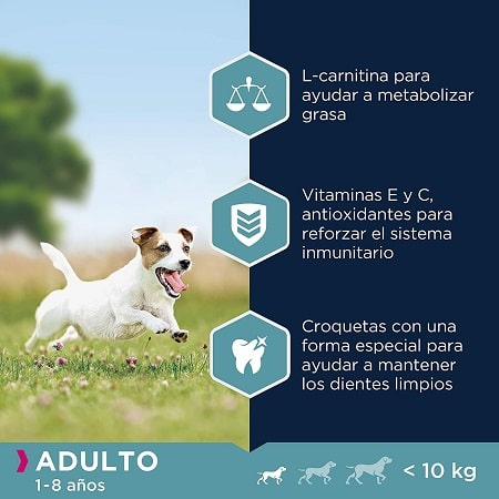 Beneficios pienso para perros adultos Eukanuba de raza pequeña