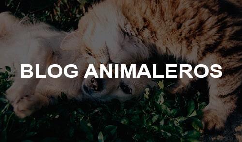 Blog Animaleros