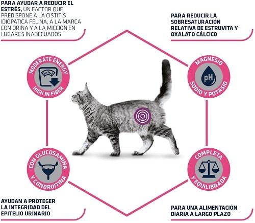 Advance Veterinary Diets Urinary Stress para gatos