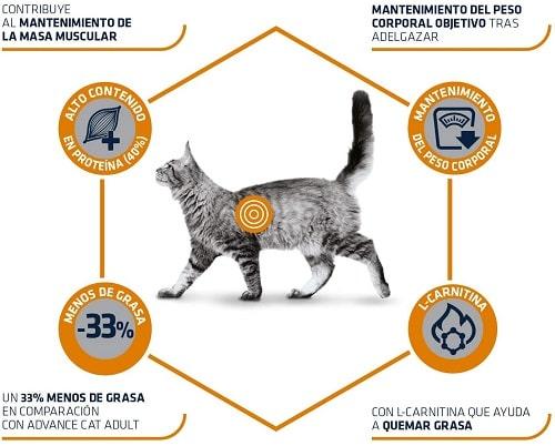 Advance Veterinary Diets Weight Balance gatos