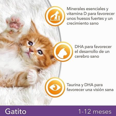 Pienso para gatitos kitten IAMS de 1 a 12 meses