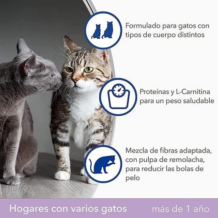 IAMS hogares con varios gatos