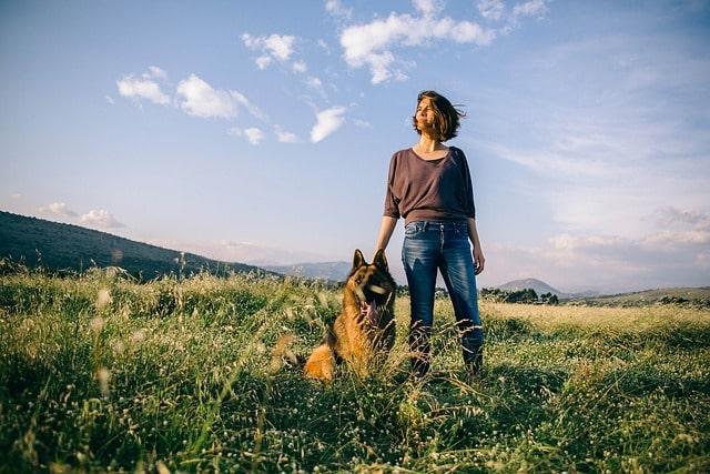 Como saber si un perro es de raza Pastor Alemán