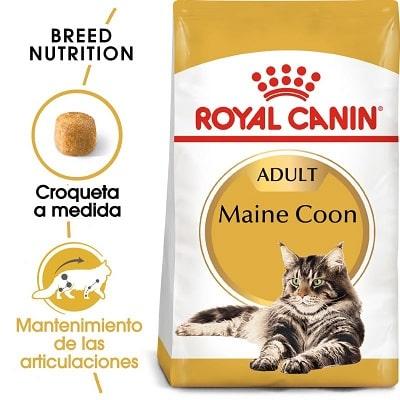 Royal Canin para gatos adult Maine Coon